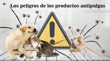 los peligros de los productos anti pulgas caniche toy