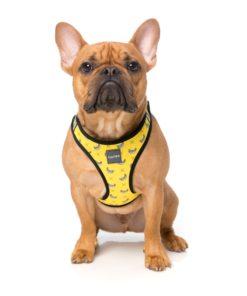 Arnés Step In Monkey Mania de la marca Fuzzyard para perros de talla pequeña. Criadores de caniches toy, caniches mini toy y cavalier