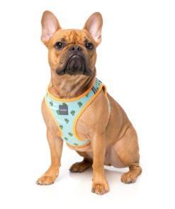 Arnés Step In Tucson de Fuzzyard para perros de talla pequeña. Criadores de caniche toy rojo, caniche mini toy rojo y cavalier