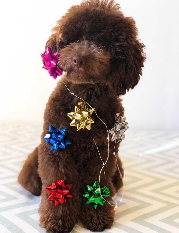 salvaterra-de-magos-tienda-perros-pequeños-con-productos-de-navidad luz.pngsalvaterra-de-magos-tienda-perros-pequeños-con-productos-de-navidad luz.png