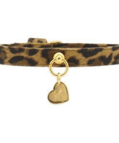 collar simple leopardo de piccoli pets. salvaterra de magos caniches toy apricot